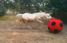 caballos graciosos