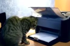 videos gatos locos