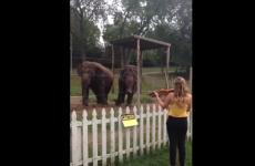 elefantes bailando al ritmo del violin