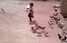niño corriendo detras de las gallinas