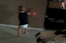 vídeo bebé y perro detrás de un láser